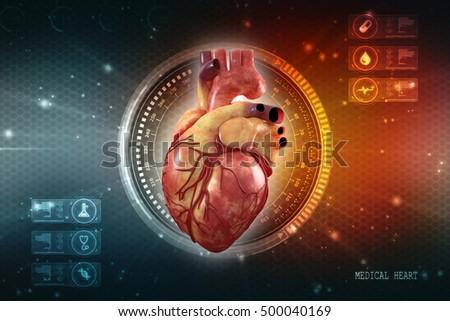 Human Heart Anatomy Of Human Heart Ez Canvas