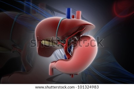 3D stomach and liver  on a color background