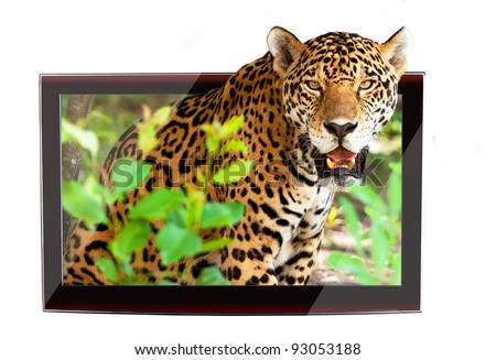 3D TV with jaguar on the display