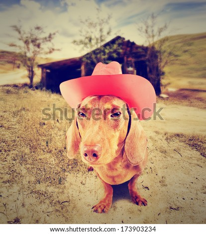 dachshund dog cowboy in front of a barn