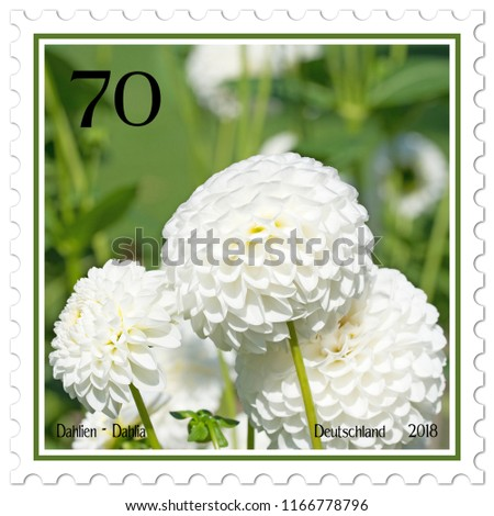 Dahlias on german postage stamp #1166778796