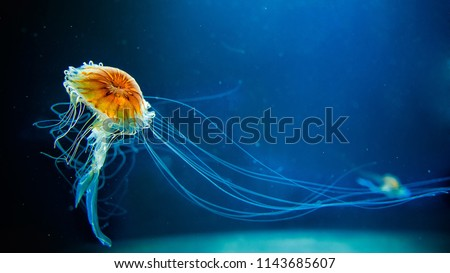 dancing jellyfish in the depths of the sea #1143685607