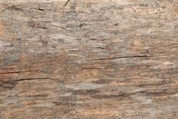 Dark brown bark texture, in the park