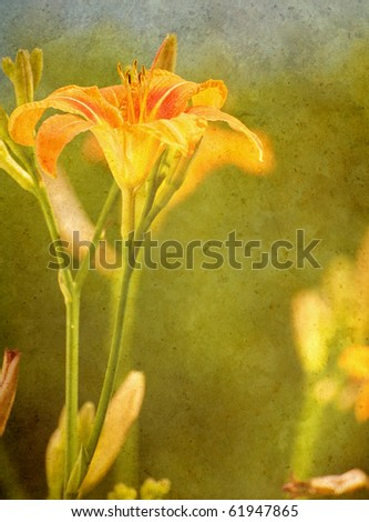 Day lily in the sunshine antiqued on texture with copy space.