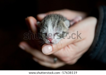 3 days old kitten in the hands of a woman