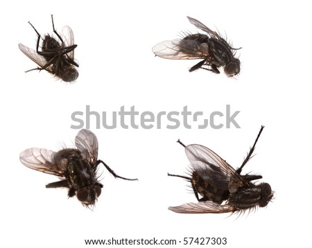 4 dead flies isolated on white