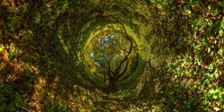 360 degree hyperbolic tunnel panorama projection of spherical panorama under yellow oak at sunny autumn day in park with blue sky and clouds