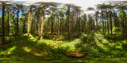 360 degrees spherical panorama of european forest with blue sky in the summer