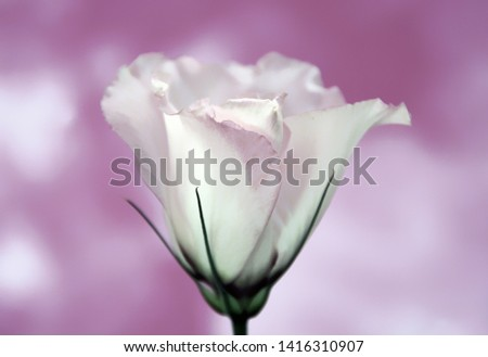 """Delicate"" A delicate White Stemmed Flower against a Purple Cloud Backdrop. #1416310907"