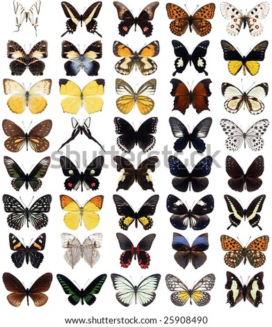 40 different butterflies