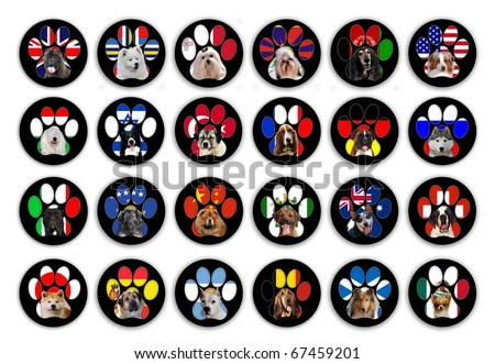 24 different dog breeds buttons isolated on whit background