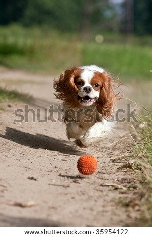 dog running the ball