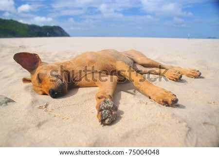 Dog Sleeping On The Beach.