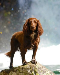 Dog Standing on a Stone