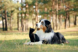 dogs and a black cat. Australian Shepherd in nature. autumn mood