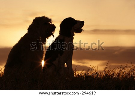 2 dogs at sunset