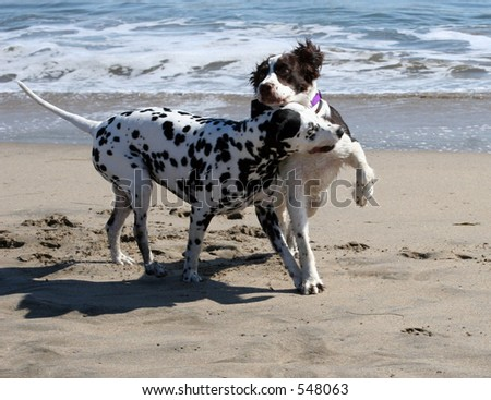 2 dogs playing on the beach