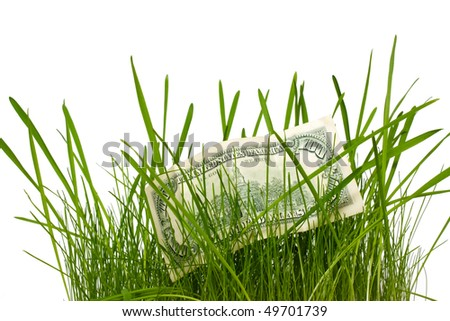 100 dollars in a grass