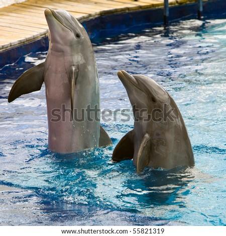 Dolphin plays
