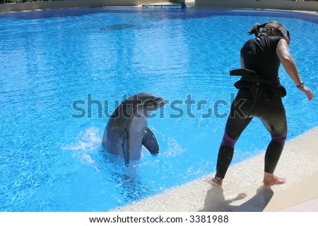 """""""Dolphin Trainer"""" Dolphin trainer runs from splashing during a training session. Shot in Las Vegas, NV."""