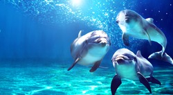 3 dolphins smiling in the ocean