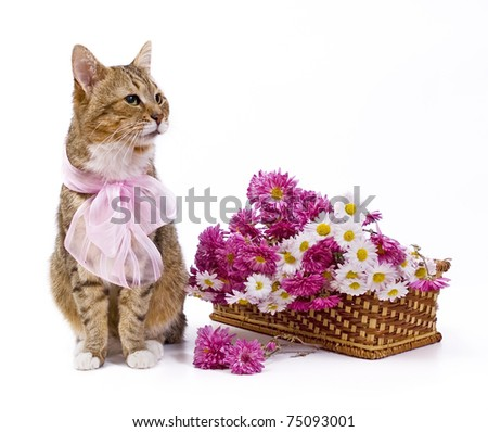Domestic cat with pink bow sitting near wild flowers basket
