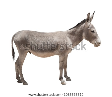 Donkey isolated a on white background