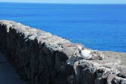 Dove on the stone wall and the blue sea
