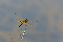 Dragonfly location Pathum Thani Thailand