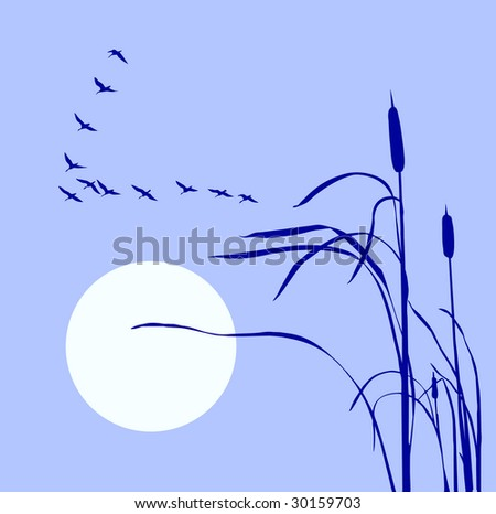 drawing flock geese on bulrush