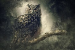 Eagle owl in the fog