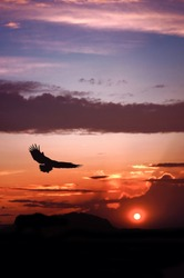 Eagle silhouette flying on dramatic sunset background