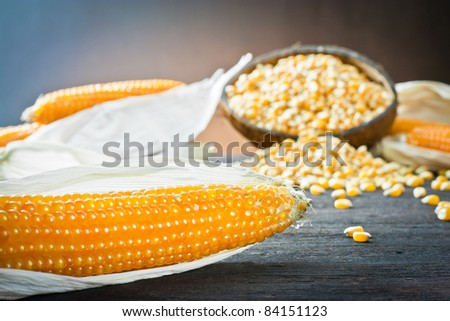 ,ear of corn,
