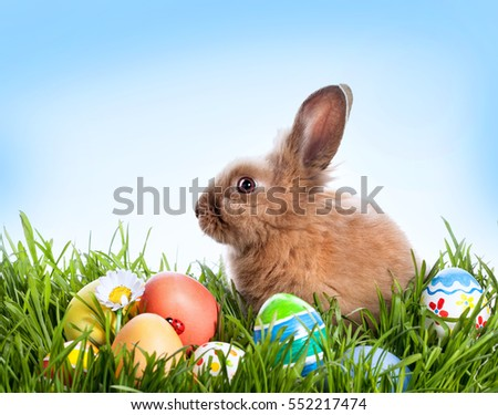 Easter bunny and Easter eggs on green grass #552217474