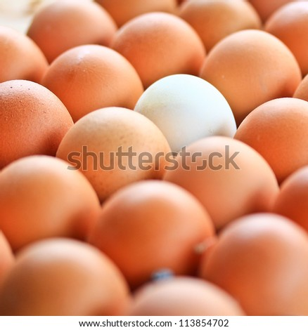 egg in carton box - stock photo