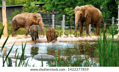 Elephant family while swimming. Fresh douche of little elephants