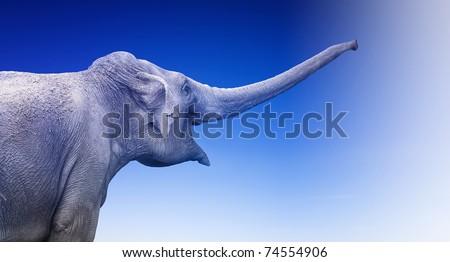 Elephant on blue background