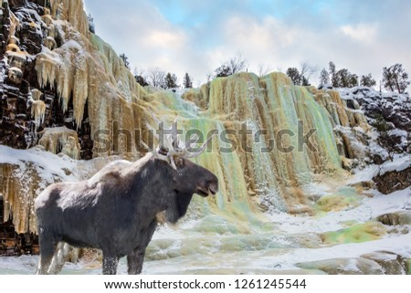 Elk is ready for the New Year in a snow-covered forest.  Ice streams of a frozen waterfall fall from a steep cliff in the forest. The concept of exotic and photo-tourism