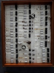 Entomological box - insects mounted inside a research box.