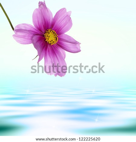 Exotic pink flower on a water dawn  background