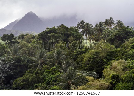 exotic vegetation in the jungle #1250741569
