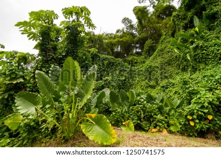 exotic vegetation in the jungle #1250741575