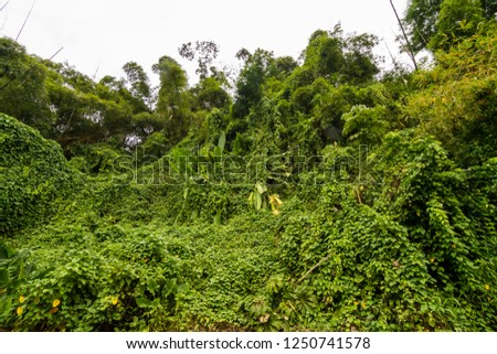 exotic vegetation in the jungle #1250741578