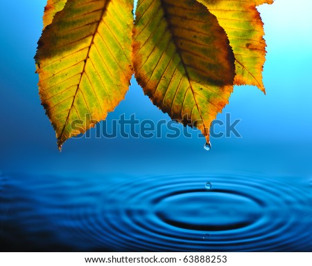 falling drops from tip of yellowed  leaf into blue rippled water - stock photo
