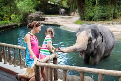 Family feeding elephant in zoo. Mother and child feed Asian elephants in tropical safari park during summer vacation in Singapore. Kids watch animals. Little girl giving fruit to wild animal.