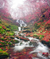 famous alpine beautiful waterfall Borzhava under the mountain village Pylypets ski resort. Cold net rough water fly through the ancient rocks on the background of bright forests in the fog
