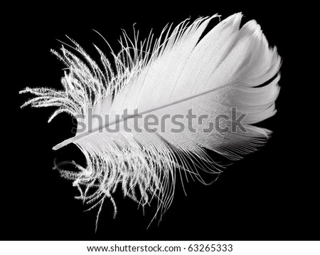 feather on the black background