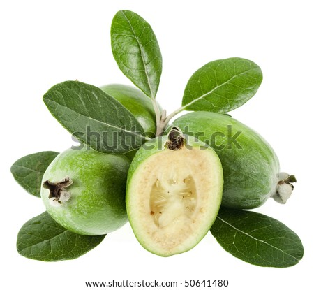 Feijoa (Acca sellowiana) - Pineapple Guava isolated on white