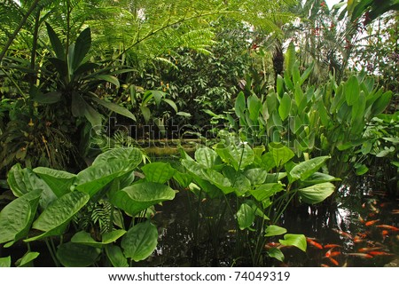 ferns, hosta and palm tree in a tropical forest (Indonesia). Natural background.