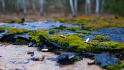 Firearm shells lying on the roof covered with moss